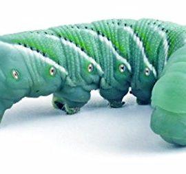12-Live-Hornworms-0