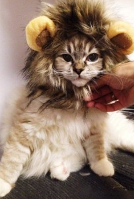 Dogloveit-Pet-Costume-Lion-Mane-Wig-for-Dog-Cat-Halloween-Dress-up-with-EarsPlease-be-aware-of-fake-products-from-other-sellers-0