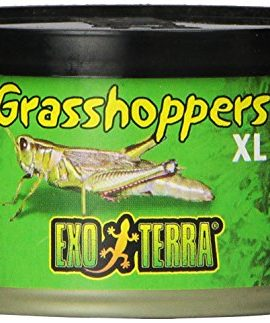 Exo-Terra-Reptiles-Canned-Food-Grasshoppers-12-Ounce-0