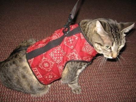 Kitty-Holster-Cat-Harness-SmallMedium-Red-Bandana-0