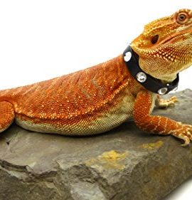 Leather-Reptile-Collar-Limited-Edition-10mm-Regaliz-Leather-with-Swarovski-Crystal-Rhinestones-0