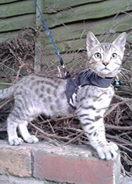 Mynwood-Cat-JacketHarness-Arctic-Combat-Kitten-up-to-8month-Escape-Proof-0