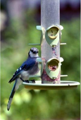 Wagners-Farmers-Delight-Wild-Bird-Food-0-2