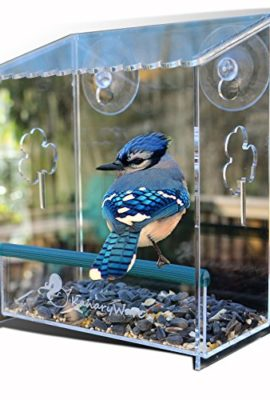 Window-Bird-Feeder-by-Kanaryware-for-Small-Large-Wild-Birds-House-is-window-mounted-See-Through-Squirrel-Proof-Easy-Install-Drainage-Holes-Strong-Suction-Cups-to-invite-Wildlife-Best-value-0