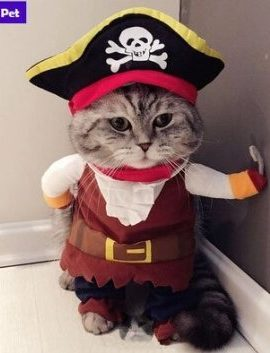 Wus-Pet-Paradise-Pirate-Style-Pet-Cosplay-Coat-0